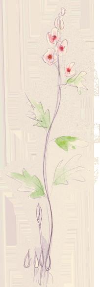 Althaia bloem
